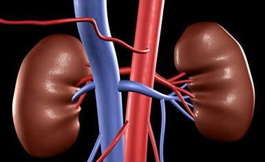 肾在身体的位置在哪里求图解
