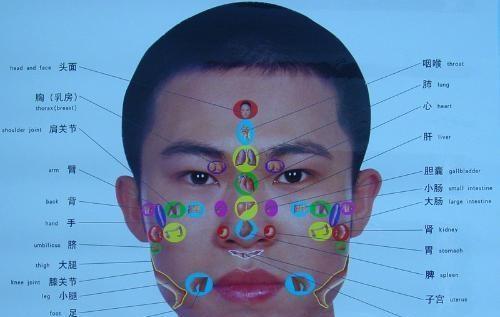 妇科器官图片素材