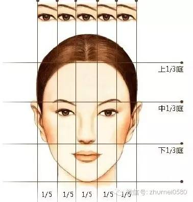 鼻子结构图 立体