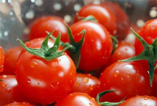 番茄功效与作用是什么呢