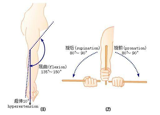 一,肘关节的屈曲(弯胳膊):   在损伤的早期阶段,当关节仍在制动的图片