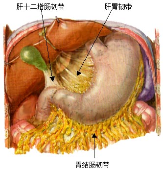 肠胃pop手绘