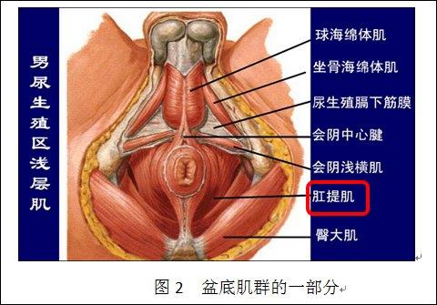 癌术后尿失禁与盆底肌训练
