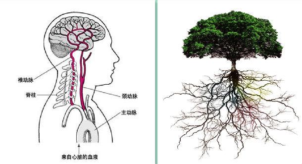树根的画法步骤