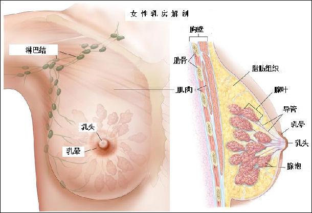 乳腺原位癌知多少?