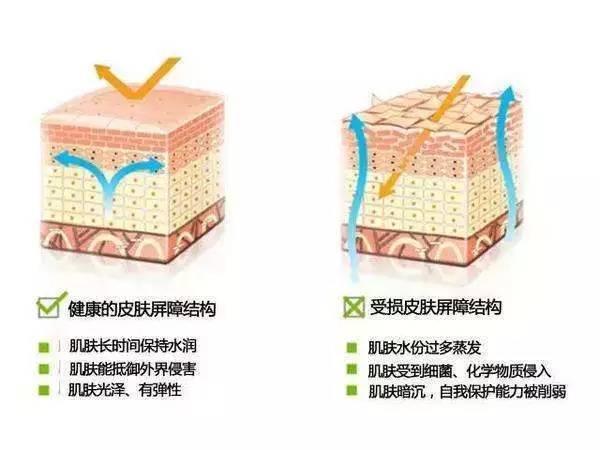个人主页 医生文章 详情    敏感性皮肤角质层结构不完整,表皮细胞间