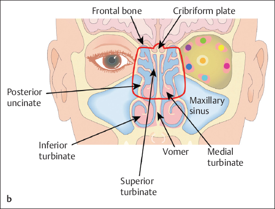 鼻腔咽喉结构图