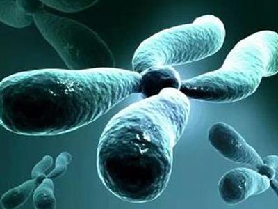 我国人工合成酵母染色体 开启生命新纪元