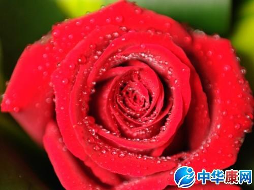 玫瑰果实可食,无糖,富含维他命c,常用於香草茶,果酱,果冻,果汁和麪包图片