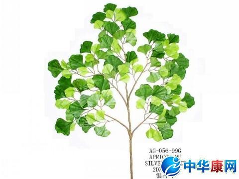 植物叶片结构的表格