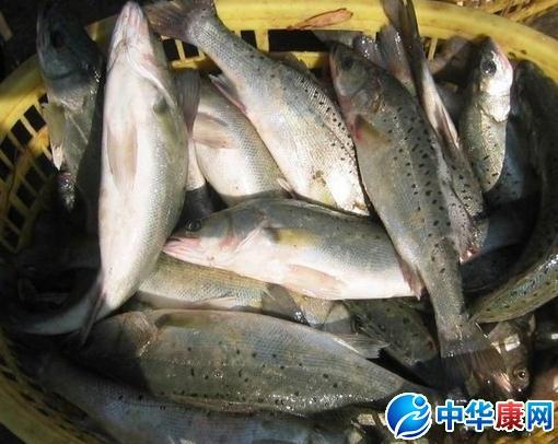 海鲈鱼的做法大全