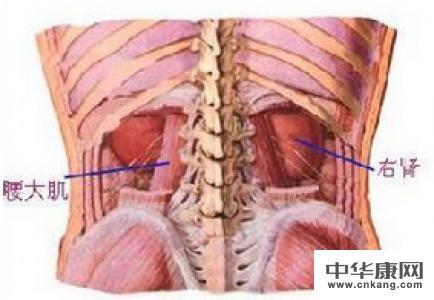 肾疼和腰疼的区别图解
