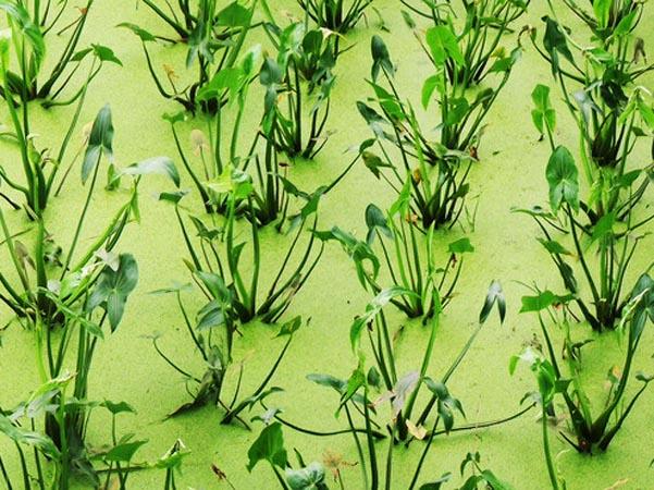 背景 壁纸 绿色 绿叶 树叶 植物 桌面 601_450