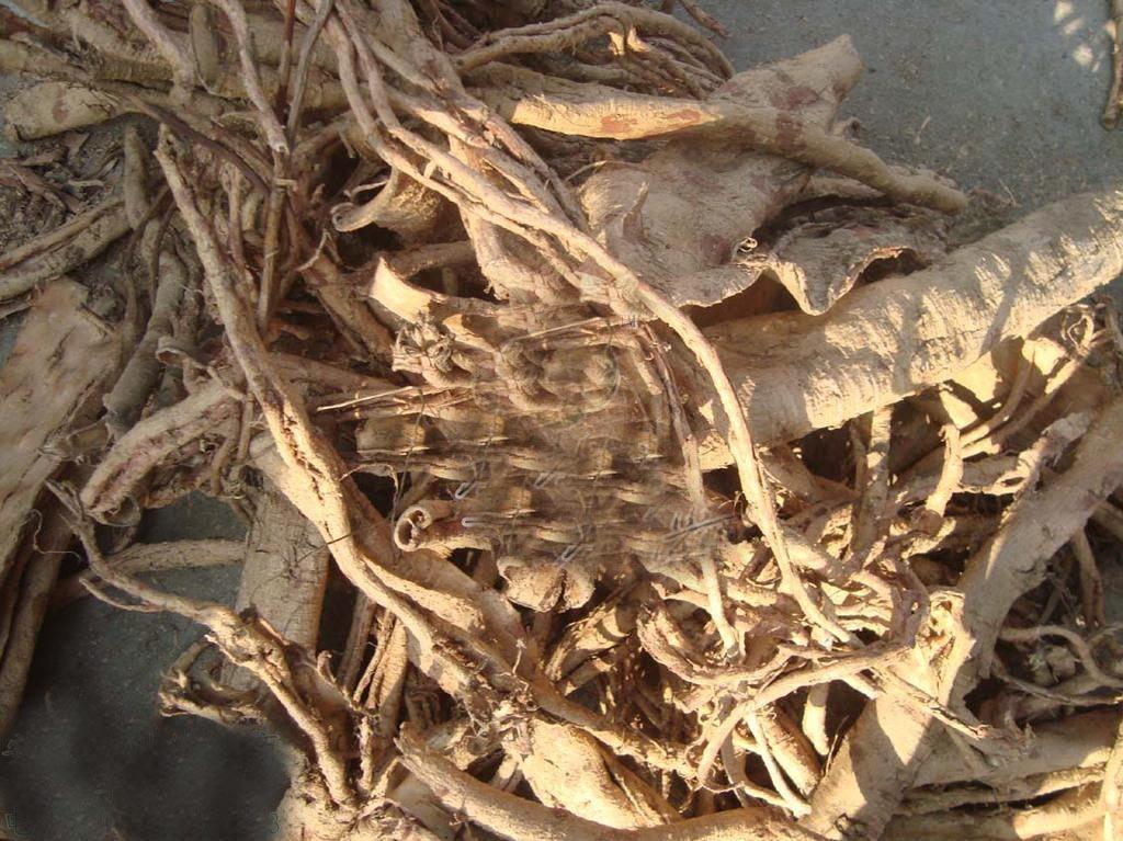 土荆皮,中药名,为松科植物金钱松的干燥根皮或近根树皮。根皮,呈不规则的长条状,扭曲而稍卷,大小不一,厚2~5mm。外表面灰黄色,粗糙,有皱纹和灰白色横向皮孔样突起,粗皮常呈鳞片状剥落,剥落处红棕色;内表面黄棕色至红棕色,平坦,有细致的纵向纹理。质韧,折断面呈裂片状,可层层剥离。气微,味苦而涩。树皮,呈板片状,厚约至8mm,粗皮较厚。外表面龟裂状,内表面较粗糙。 土荆皮价格还是适中的,价格大概在20-30元每500克。中药材正品土荆皮 土槿皮 荆树皮 金钱松皮杀虫止痒疥癣瘙痒500克 价格为22元。土荆皮