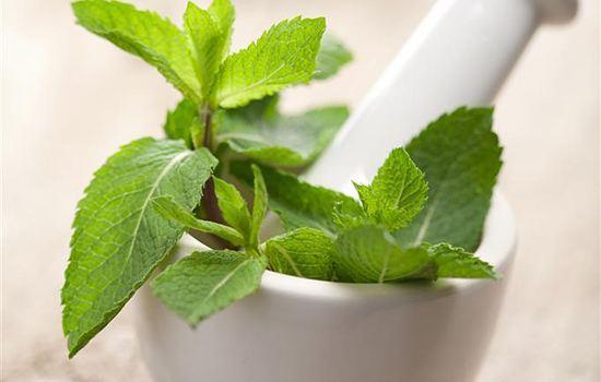 背景 壁纸 绿色 绿叶 盆景 盆栽 树叶 植物 桌面 550_350