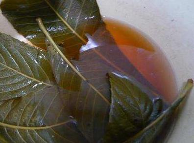 孕妇可以喝枇杷叶煮水